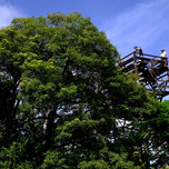 THE HOWLER MONKEY TOWER