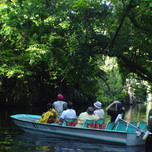 Boat-Tours-at-Evergreen