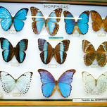 Musee de Papillons 1